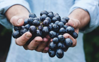 Huiswerkdruif: cabernet sauvignon